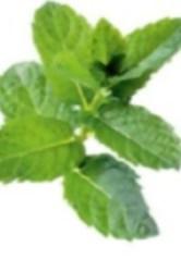 cultivar hierbas aromaticas