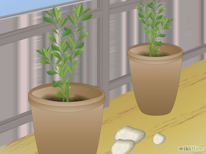 Grow Fruit in Pots Step 5.jpg