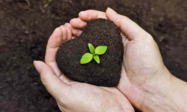 ¿Qué es el humus de lombriz y que beneficios trae para el suelo y las plantas?