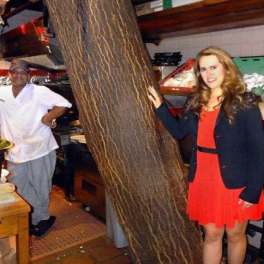 12. Un restaurante de Kit Kat tiene un edificio de 4 pisos con un árbol en medio de la cocina.