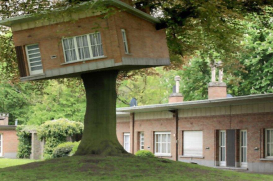 13. La casita en el árbol, en medio de un hogar de ancianos.