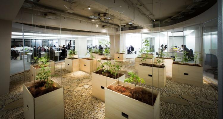 Estos trabajadores de oficina compartan sus cubículos con una granja urbana