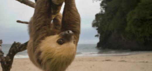 sloth-700x391