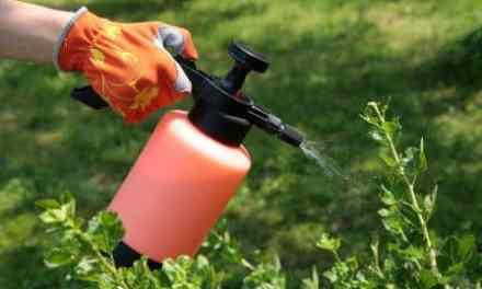 Recetas de Insecticidas caseros y ecológicos para tus plantas