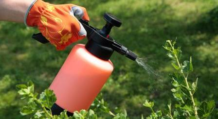http://www.quickanddirtytips.com/sites/default/files/styles/insert_medium/public/images/6112/spraying_plants.jpg?itok=Dh-W0zCo