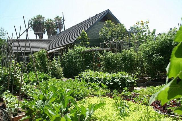 Esta familia produce 2700 kg de comida al año en 370 mts2 - El Horticultor