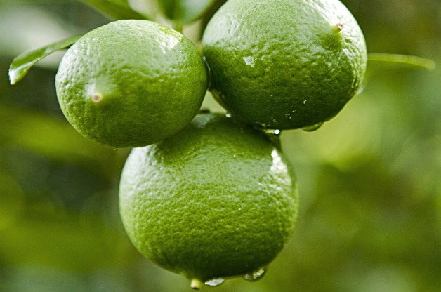 Top 10 Fruit Trees for Small Spaces: Limes