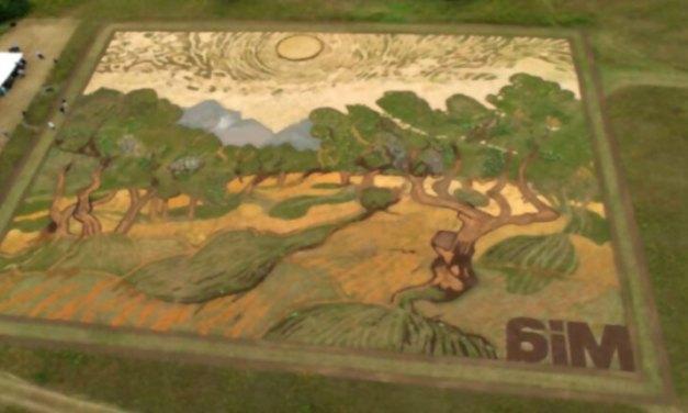 Artista planta un campo de casi 5 kms² para recrear un cuadro de Van Gogh