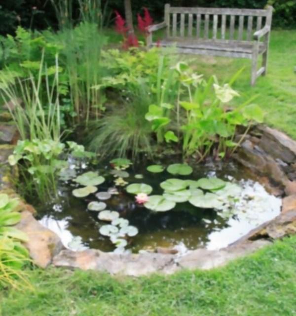 Cómo construir un estanque en tu jardín