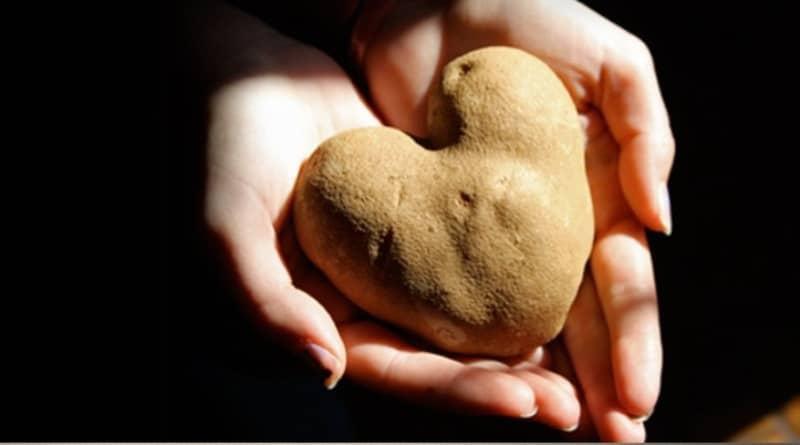 En España recogen frutas y verduras estéticamente feas para donarlas a quienes más las necesitan