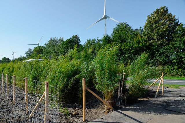 Sustainable Bamboo Highways