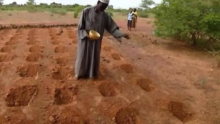 Técnica de cultivo Zai
