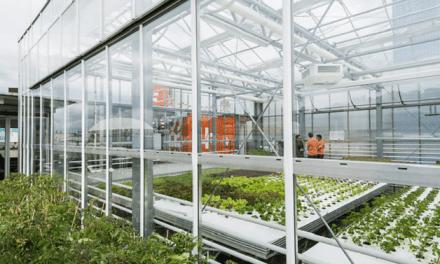 Ciudad de Sao Paulo, Brasil, tendrá granjas orgánicas en la cima de sus edificios