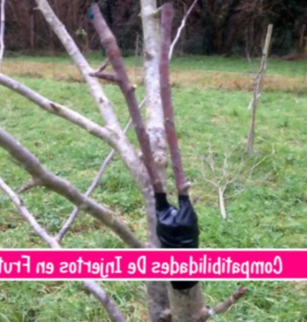 Lista de compatibilidad de injertos en frutales