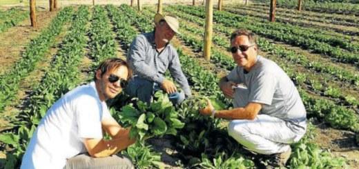 producir-45-mil-kg-de-comida-en-10-hectareas-1 2