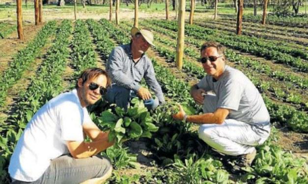 Producen 45 mil kg de comida agroecológica en tan solo 10 hectáreas