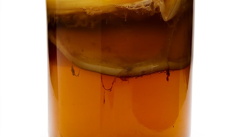 https://upload.wikimedia.org/wikipedia/commons/4/48/Kombucha_Mature.jpg
