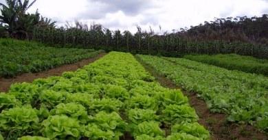 , La agricultura del futuro será agroecológica