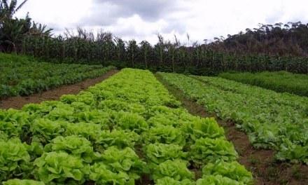 La agricultura del futuro será agroecológica