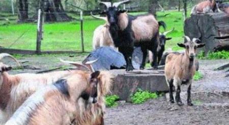Uruguay: El Zoo municipal de Paysandú cerró y liberan a 80 animales
