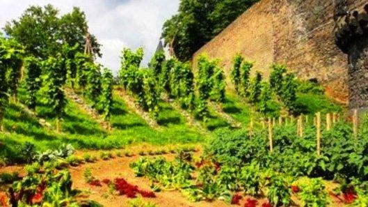 La ciudad comestible de Alemania - El Horticultor