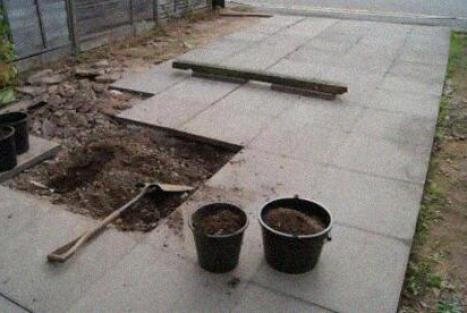 , Convirtiendo un desierto de cemento en una Jungla de Abundancia