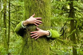 Los beneficios de abrazar árboles han sido oficialmente validados por la ciencia