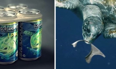 Envases de cerveza comestibles prometen reducir las muertes de animales marinos