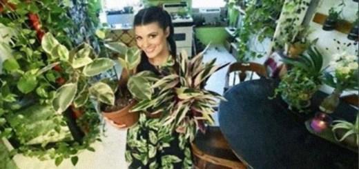 A mulher que cultiva 150 espécies de plantas em seu apartamento