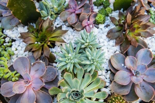 suculento jardín