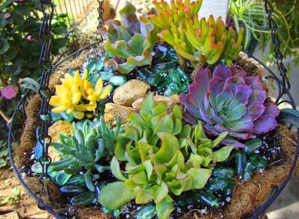 Ver fotos de plantas suculentas 86