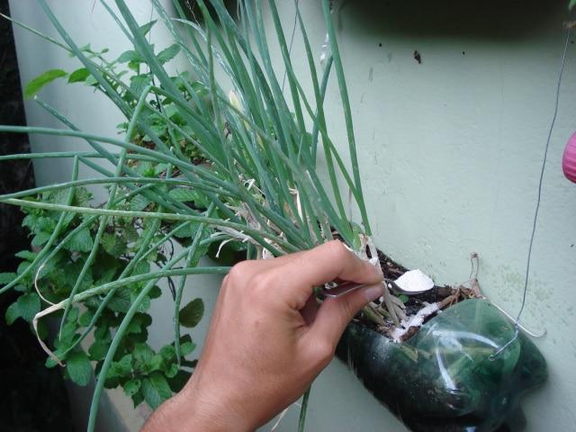 Como aportar calcio a las plantas con cascaras de huevo