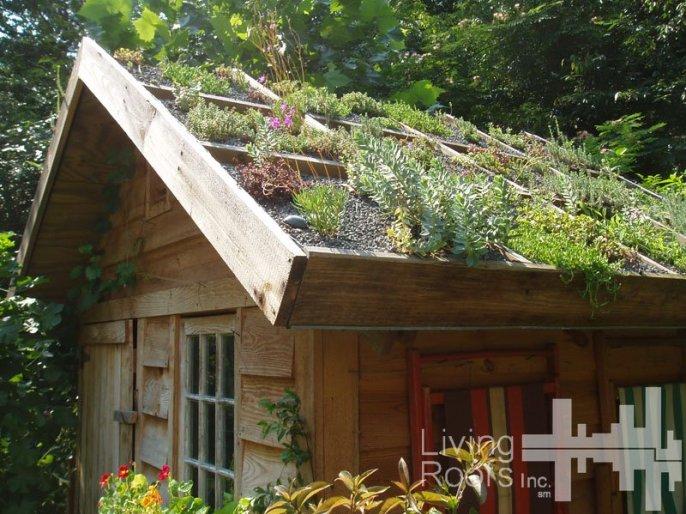 Cómo construir un techo verde