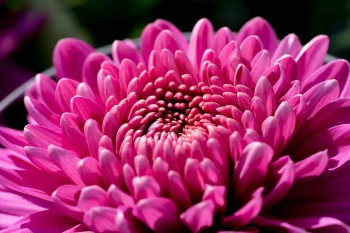 , 5 flores que alejan a las plagas de su huerto