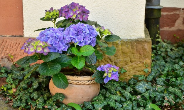 6 formas de reanimar una planta que está muriendo
