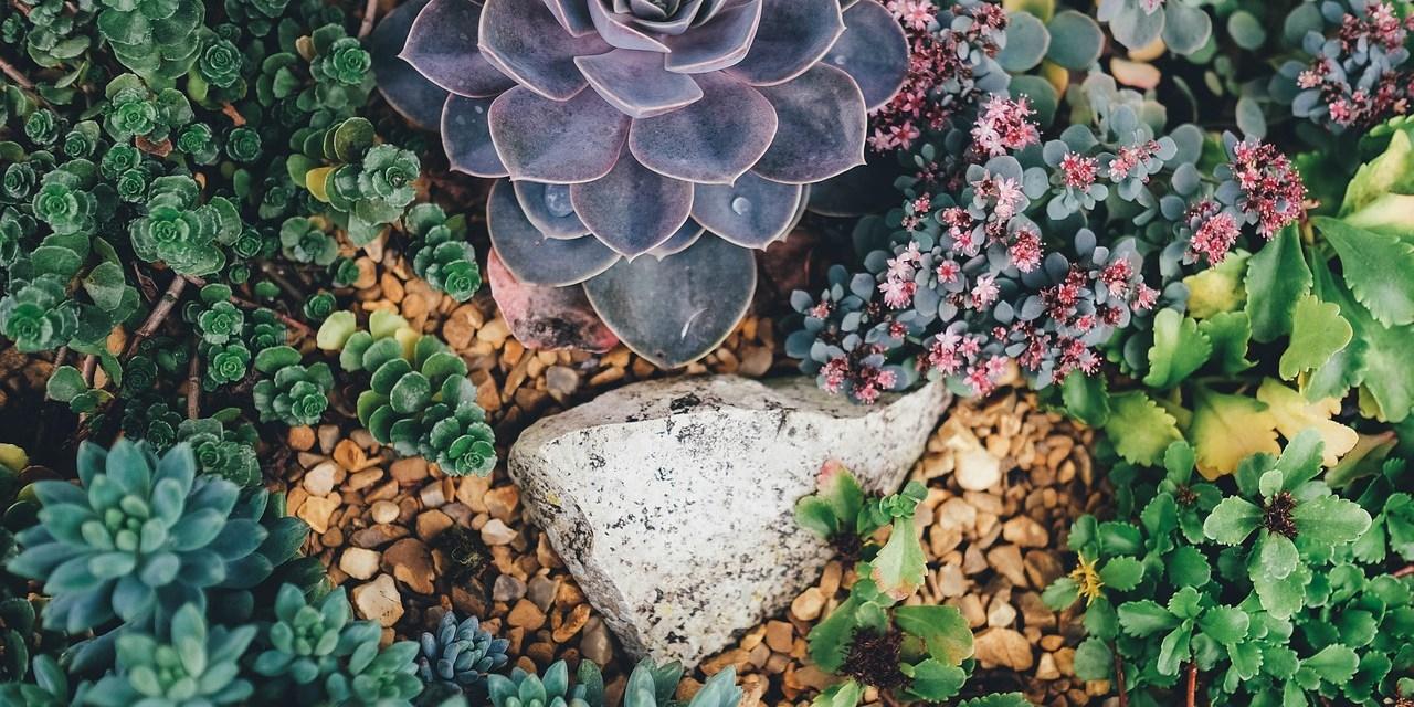 Suculentas: conozca las principales variedades y cómo cultivarlas