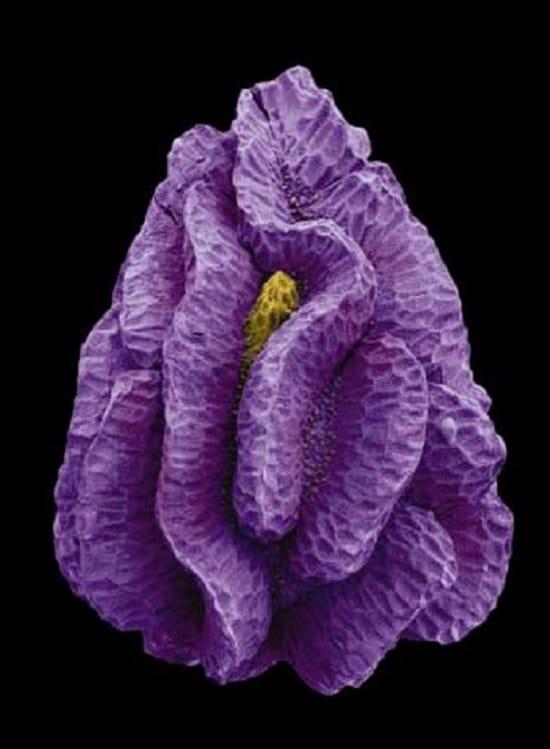 Imágenes microscópicas de semillas