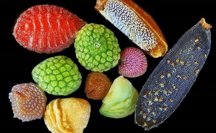, Imágenes microscópicas de semillas