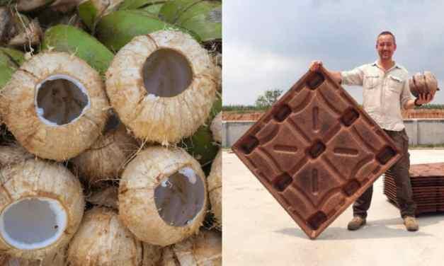 Pallets hechos de cáscaras de coco salvan 200 millones de árboles al año