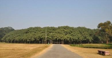 Bosque de un solo árbol: conozca el árbol más grande del mundo