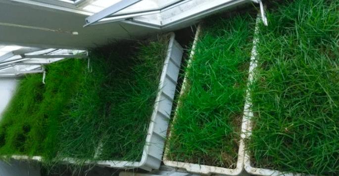 Bióloga crea sustrato para techo verde con fibra de coco y bagazo de caña