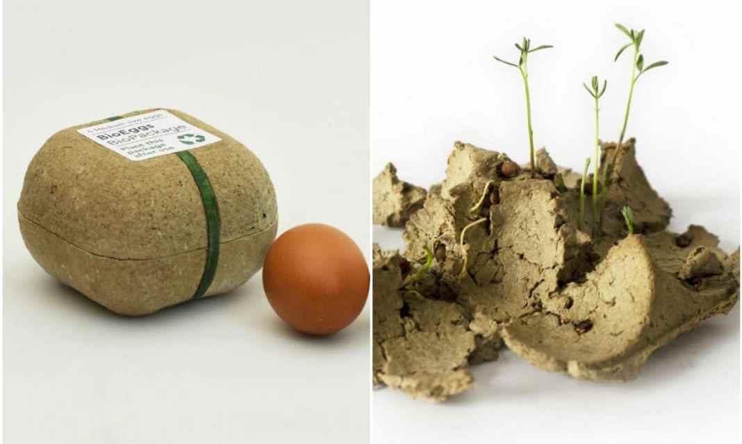 Esta caja de huevos puede ser plantada después de su uso