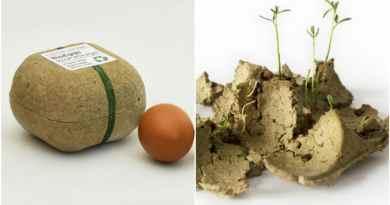 , Esta caja de huevos puede ser plantada después de su uso
