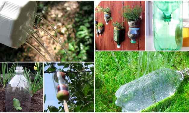Guarda tus botellas de plástico: ¡Pueden ser muy útiles en el jardín!