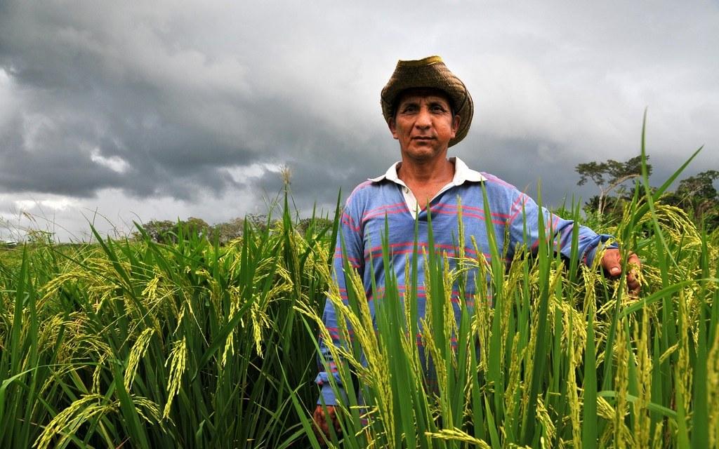 Bolivia será alimentariamente autosuficiente invirtiendo en pequeños agricultores