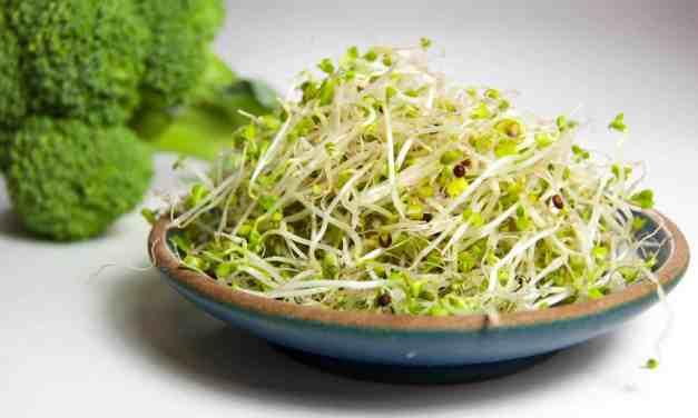 Los brotes de brócoli podrían ayudar a controlar la esquizofrenia