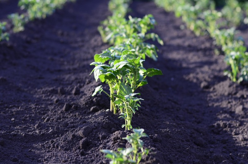 Huerta orgánica - suelo
