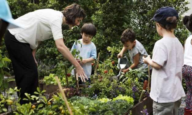 Georgia introducirá la enseñanza de la agricultura en la educación básica