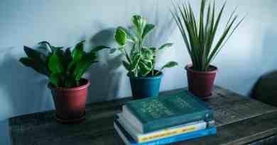 , 10 Plantas de Interior resistentes bien fáciles de cuidar