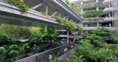 Cuando se les pidió que construyeran un hospital que redujera la presión arterial, construyeron un santuario 'similar a un bosque'